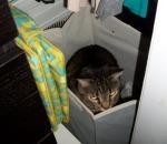 disgruntled cat hiding in laundry hamper