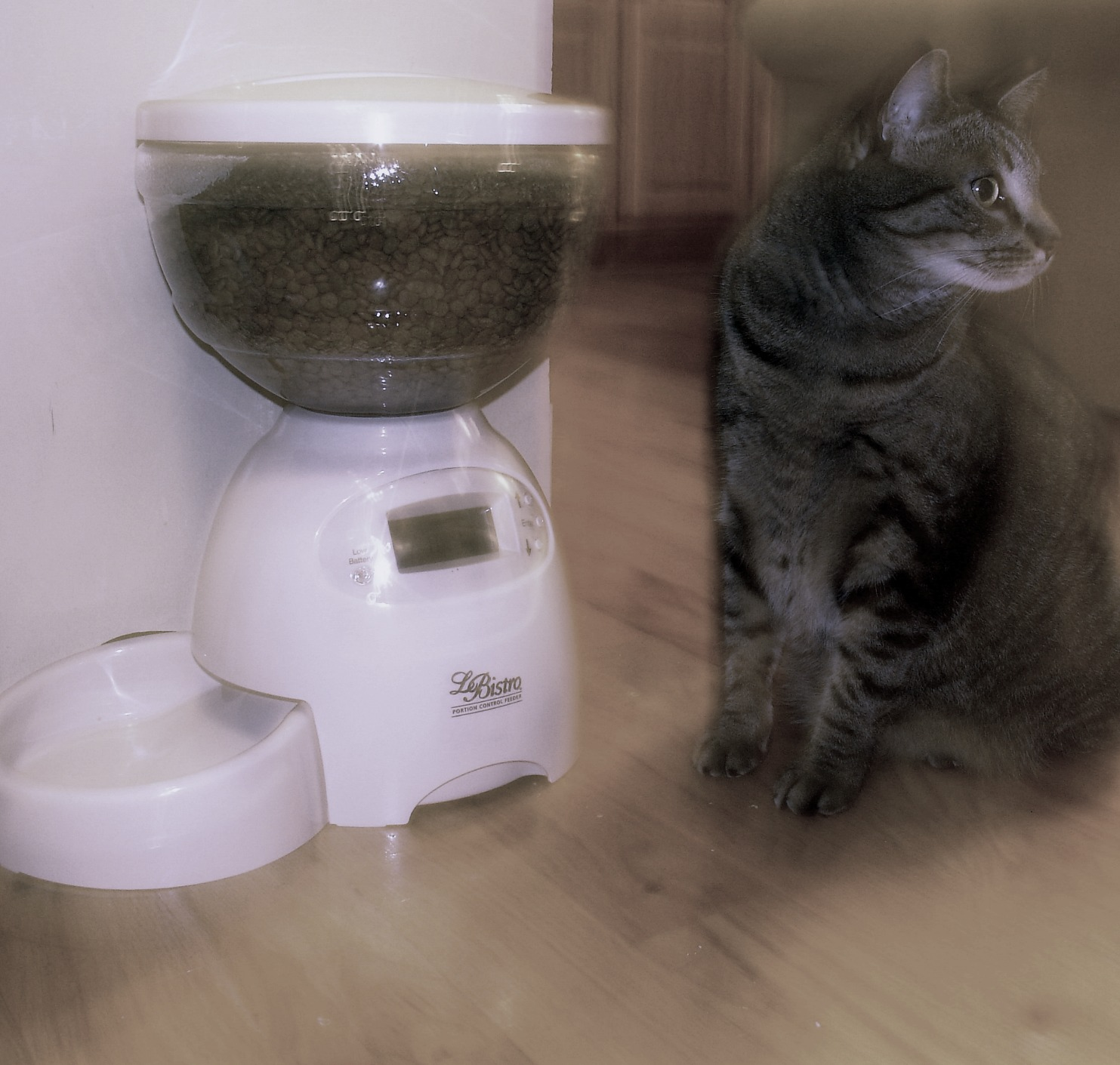 sophie next to and as big as cat feeder